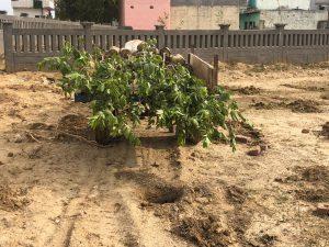 tree plantation5